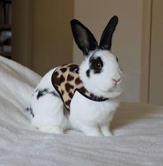 For stylish rabbits.