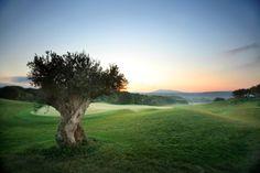 The Dunes Course, 7th hole.  Temes S.A. - Costa Navarino, Greece / Finalist, Destination Award