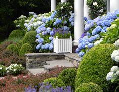 Wow! Hydrangeas and boxwood so pretty!