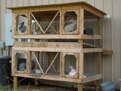 Double decker rabbit hutch (2'X3' each cage) I built over the winter for our flemishX meat rabbits.     Roof collects water into a trashcan turned rainbarrel, middle gutter collects manure to be put directly onto the garden, bottom will eventually house nightcrawlers. Permanent nestboxes w/ removeable bottoms to come before winter.