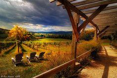 hillsborough vineyard, the view, virginia vineyard, vineyard view, pools, hillborough vineyard