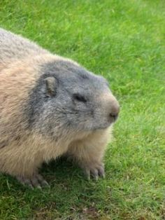 Groundhogs On Pinterest Groundhog Day I Want You And Shadows