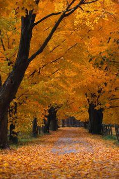 I miss Autumn in New England, it was always stunning!