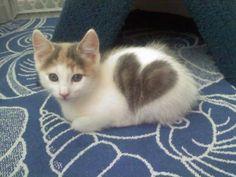 she wears her heart on her fur!