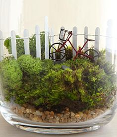 Going For A Ride Moss Terrarium Going for a Ride Moss