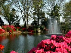 Each April, the month long Azalea #Festival in #Muskogee is a sure sign that spring is here. Explore 40 acres of blooming #flowers at Honor Heights Park.