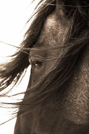 Robert Dawson - Don't Bother Me - Horse Print - Canvas Options