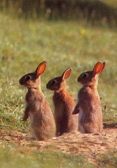 Rabbit Rabbit Rabbit @L G Moses