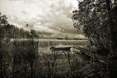 Black crow by pierrepocs, via flickr