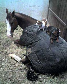 Horsey, you can sleep right here we got this.