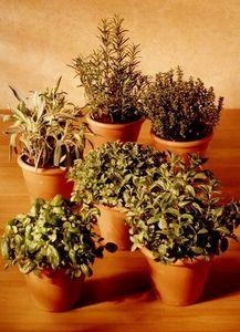 How to Grow an Herb Garden in Pots