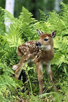 ☀Real Life Bambi