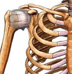 The Anatomy of Chaturanga. ~ David Keil