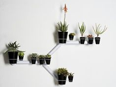 Another twist on indoor wall garden