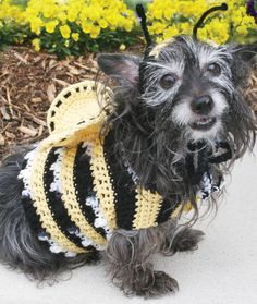 Dog's Crochet Bumble Bee Costume Free Pattern from Red Heart Yarns