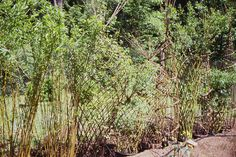 Garden Design Alastair . What a great idea for a bamboo privacy screen.
