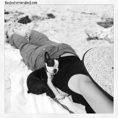 Stelly sleeping in her favourite spot - on the beach snuggled into the small of my back #bostonterrier