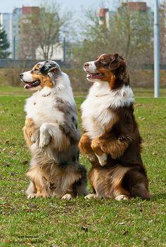 Sitting Pretty Doggies