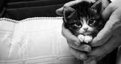 I am a cat person!!!