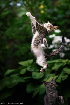 21 Tips for Taking Incredible Cat Photos, by Zoran Milutinovic