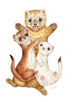 A bunch of Mustelidae <3