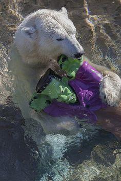 Tatqiq failed to drown Frankenstein, but she had fun trying. Happy early #Halloween!