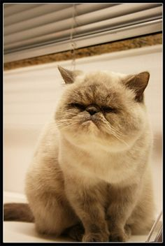 I hate cats, but it's just so angry and fat! :D
