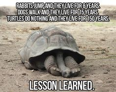 Lesson Learned
