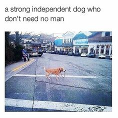 Now that's an independent dog!