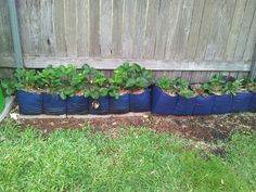 Re-purposing two hanging jumper storer's into strawberry planter's..