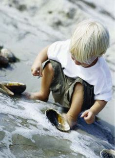 . he finds sea shells by the seashore .