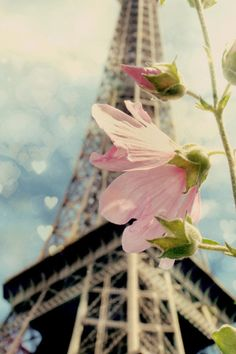 Beauty and love  in Paris