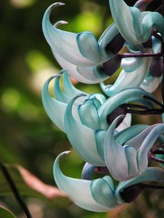 ☀CQ Color My World with turquoise and jade! An enchanting jade vine