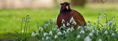 Calendar Competition 2013. THERE'S £4,000 up for grabs in Anglia Co-operative's great wildlife photographic competition.