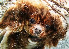 Dogs Underwater by Seth Casteel  littlefriendsphoto.com