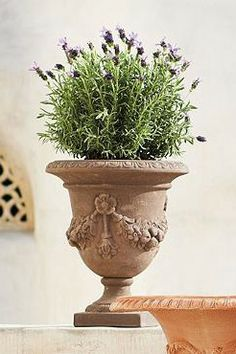 Drawing on classic Italian designs, the Festonata Planter calls for noble placement on a sweeping veranda or in a quaint courtyard.