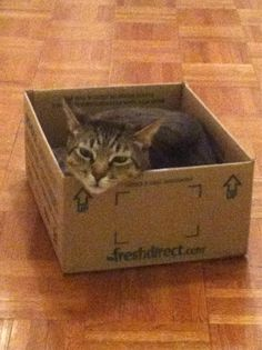 "Our adorable ""new spokesman ..."" freshdirect box"