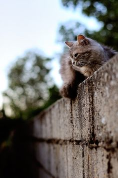 Sitting on a wall