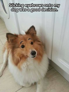 animal pics, memes, funny dogs, animal funnies, funny pictures, winnie the pooh, puppi, eyebrows, eyes
