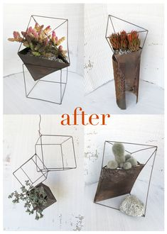architectural planters for succulents
