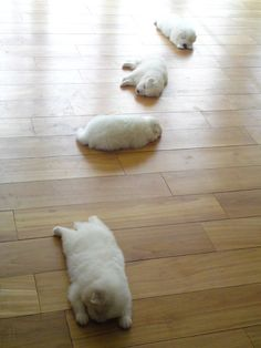 These sleepy pups left behind a trail...haha