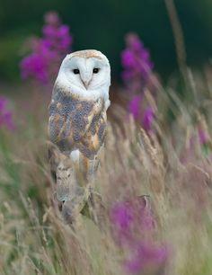 cute owl *