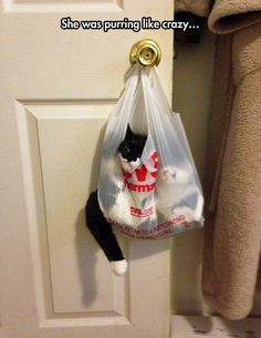 One of my cats loved to be carried in plastic bags like this...