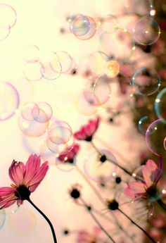 Beautiful flowers and bubbles