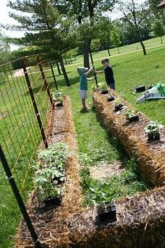 How to plant a straw bale garden!  T posts + wire + bales + water/fertilizer.