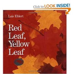 Red Leaf, Yellow Leaf--Lois Ehlert. Another fall book must.