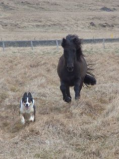 The race is on. http://www.annabelchaffer.com/categories/Equestrian-Gifts/