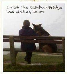 I wish :( <3 rainbowbridg, anim, rainbow bridge, pet, rainbows, bridges, dog, quot, visit hour