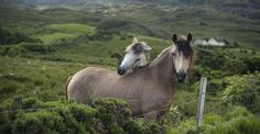 Ireland: land of the horse