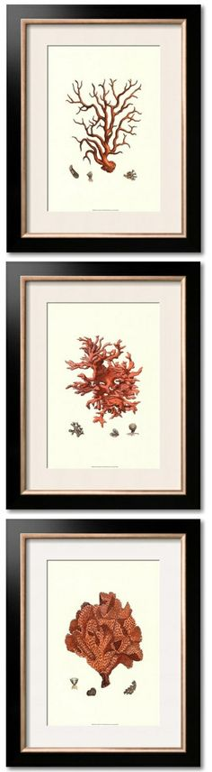 wall art, interior design, beverly hills, coral, frame, decorating ideas, home decorations, decor idea, wedding gifts